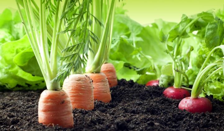 рынок тепличных овощей, рынок овощей
