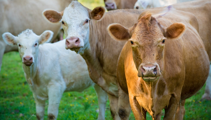 рынок говядины