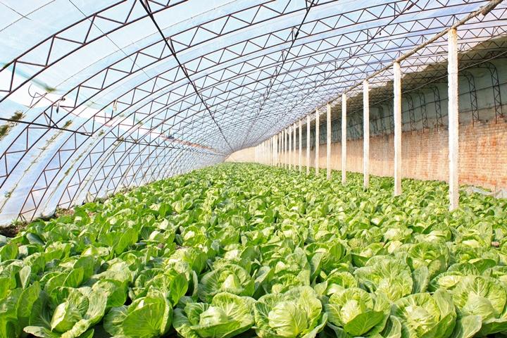 рынок свежих овощей, рынок овощей